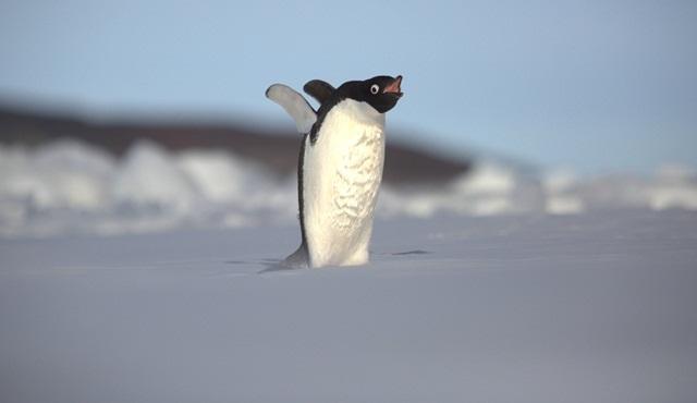 7. Kıta: Antarktika mücadele dolu bölümleriyle National Geographic ekranlarında!