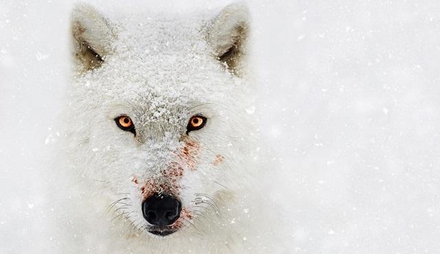 Bear Grylls ile Vahşi Gezegen, National Geographic'te başlıyor!