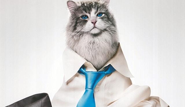 Benim Babam Bir Kedi filmi Star Tv'de ekrana gelecek!