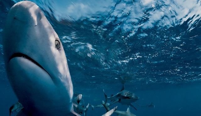 Nat Geo Wild'da Köpekbalığı Festivali!