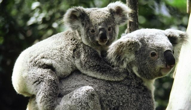 Vahşi Avustralya: Hayatta Kalma Savaşı, National Geographic WILD'de ekrana gelecek!
