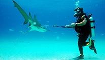 Köpekbalığı haftası Discovery Channel