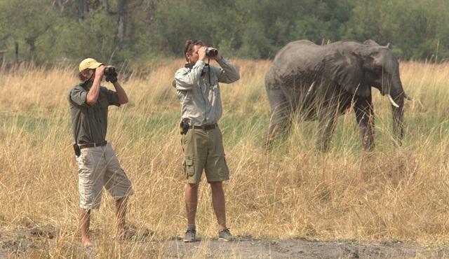 Safari Ekibi Nat Geo Wild ekranlarında