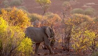 Kritik Görev: Namibya, Nat Geo Wild'de ekrana geliyor!