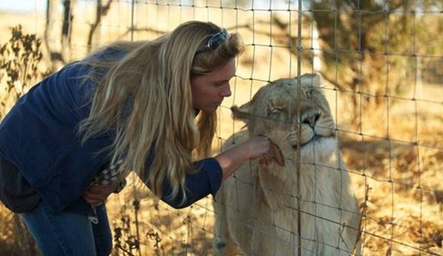 Aslan Kraliçe yarın Animal Planet ekranlarında başlıyor!