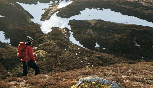Vahşi Yolculuk: Kuzey İskoçya Nat Geo Wild'da başlıyor