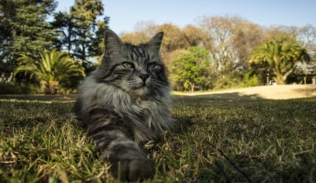 Büyük Kediler Nat Geo Wild ekranlarında başlıyor