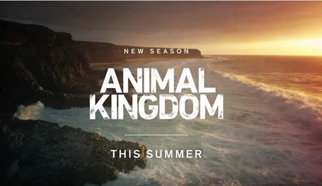 Animal Kingdom 3. sezonuyla bu yaz ekranlara dönüyor