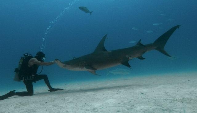 Görgü Tanıkları: Köpekbalığı Saldırısı, National Geographic WILD kanalında ekrana gelecek!