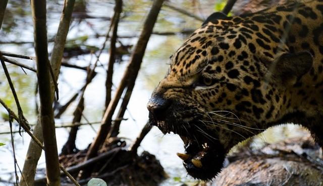 """""""Vahşi Yolculuk: Kolombiya"""" Nat Geo Wild'da!"""