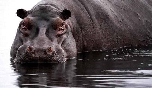 Afrika'nın Vahşi Yüzü Nat Geo WILD'da ekrana gelecek!