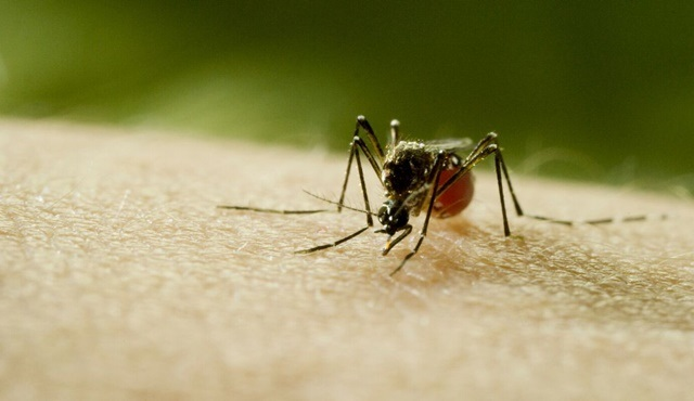 Discovery'den çarpıcı bir belgesel: Sivrisinek Discovery ekranlarında başlıyor!
