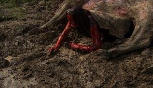 Teksas Katliamı filminin öncesini anlatan Leatherface