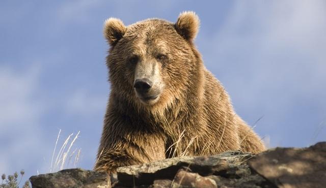 Hayvan Saldırılarından Kurtuluş Hikayeleri, yarın akşam Animal Planet ekranlarında başlıyor!