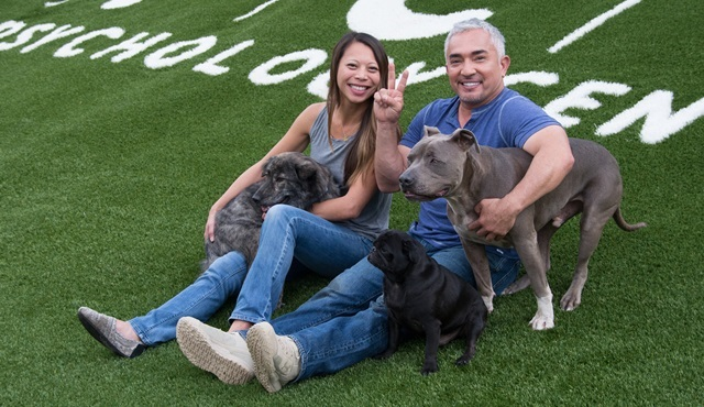 Cesar Milan ile Köpekler Diyarı Nat Geo People ekranlarında başlıyor