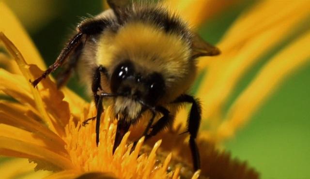 """Nisan'da """"Böcekler ve Örümcekler"""" hakkında tüm merak ettikleriniz Da Vinci Learning'de!"""