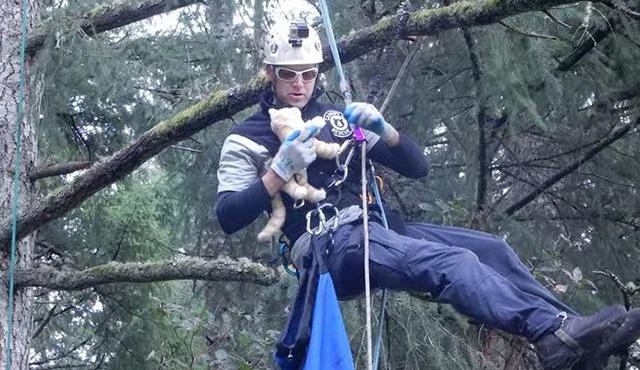 Ağaçtan Kedi Kurtarma, Animal Planet'te başlıyor