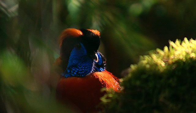 Vahşi Yolculuk: Vietnam Nat Geo Wild'da ekrana geliyor