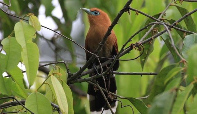 Borneo'nun Kayıp Krallığı Nat Geo Wild ekranlarında