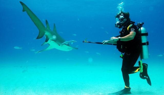 Köpekbalığı haftası Discovery Channel'da başlıyor