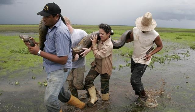 İnsanların ve hayvanların karşı karşıya geldiği doğal mücadele Nat Geo Wild'da!