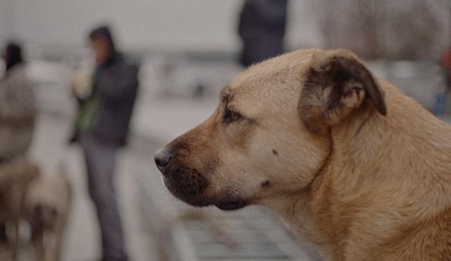 GAİN ve HAYTAP sahipsiz hayvanlara destek kampanyası başlatıyor!