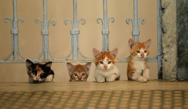 Pera Film'in konuğu kediler: Miyav! Dilini Kedi Mi Yuttu? film programı 4 Şubat'a kadar devam ediyor!