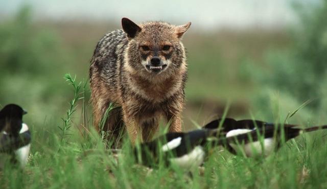 Vahşi Avcılar, National Geographic WILD'da ekrana gelecek!