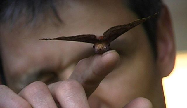 Kelebek koleksiyoncusu Stefan Naumann'ın hikâyesi WitchTV'de!