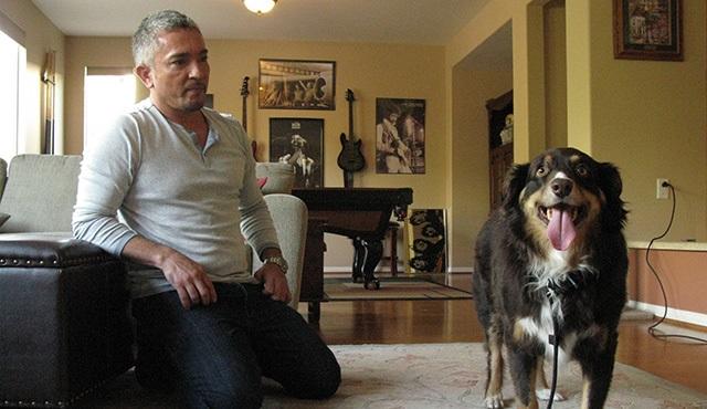 Köpeklere Fısıldayan Adam, 8. sezonu ile Nat Geo People'da