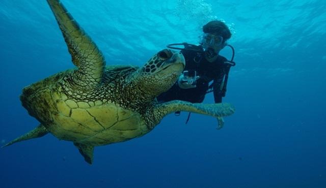 Kritik Görev: Umut Denizi Nat Geo Wild ekranlarında başlıyor
