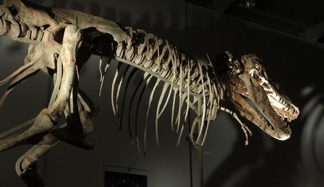 BBC Earth bu kez dinozorların peşinde!