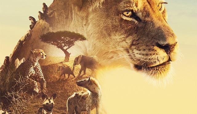 Serengeti Belgeseli'nin birinci sezon ilk bölümü BBC Earth'te yayınlanacak!