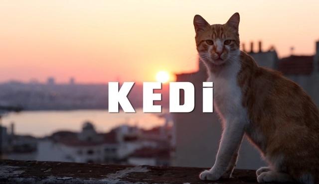Kedi Filmi: İstanbul'un Süper Kahramanları