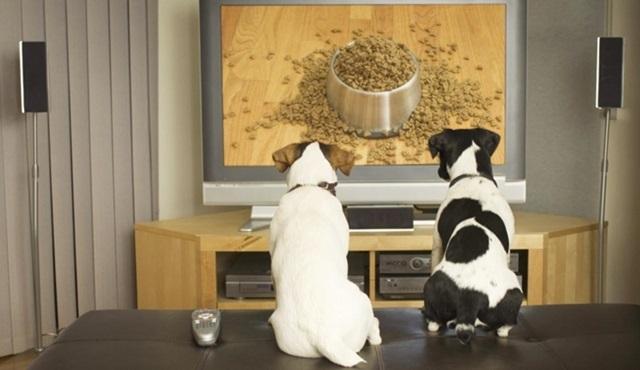 ''Cumartesi akşamı ne izleyeceksin?'' anketi sonuçlandı!