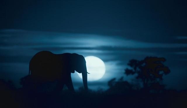 Dünya'da Gece belgeselinin fragmanı yayınlandı!