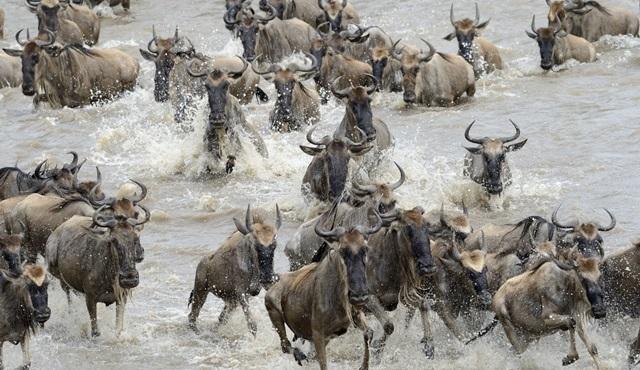 Dünyanın en vahşi 10 canlısı Nat Geo Wild'da!