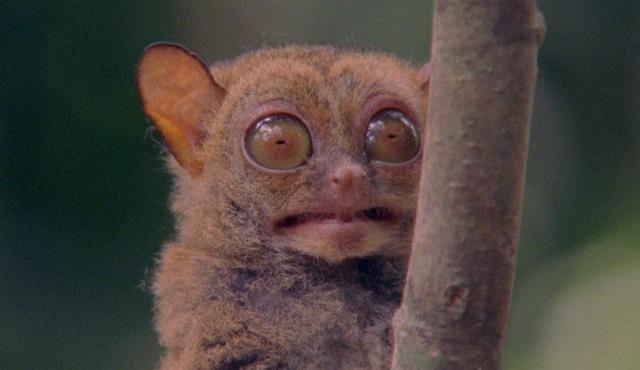 Sıra Dışı Canlılar: Garip Suratlar Nat Geo Wild'da!