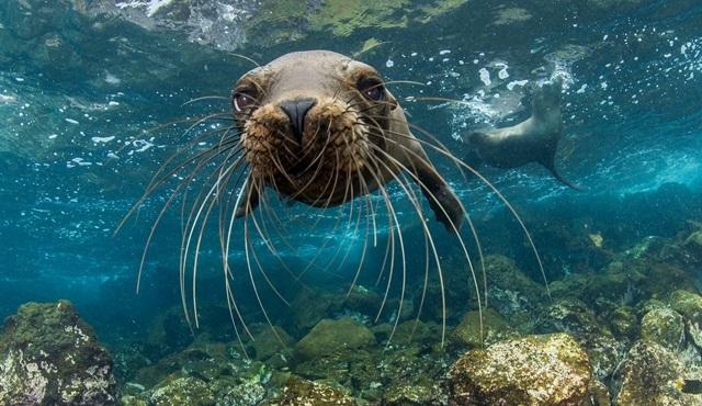 Kritik Görev: Galapagos Adaları, Nat Geo Wild ekranlarında başlıyor!