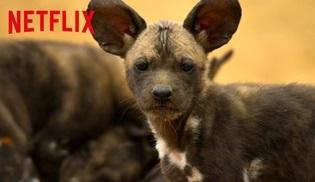 Netflix, yeni belgeseli Gezegenimiz'in uzun fragmanını yayınladı