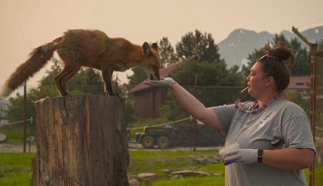 Alaska'nın Kahramanları yeni sezonuyla National Geographic WILD ekranlarında!