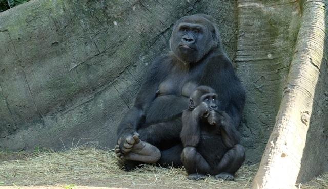 Bronx Hayvanat Bahçesi yarın Animal Planet ekranlarında başlıyor!
