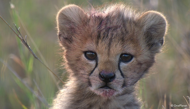 Afrika'da Doğanlar ilk bölümüyle Nat Geo WILD'da ekrana gelecek!