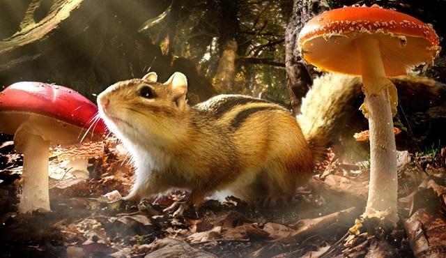"""Küçük hayvanların """"Gizli Krallıklar""""ı BBC Earth'te!"""