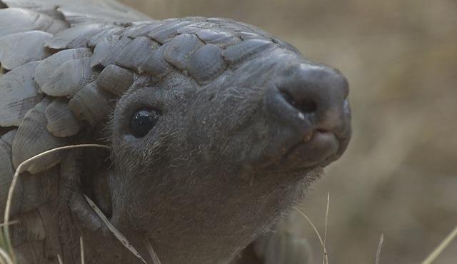 Güney Afrika'nın vahşi güzellikleri Nat Geo Wild'da ekrana geliyor