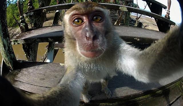 Hayvanların İnanılmaz Selfieleri, Nat Geo Wild'da başlıyor