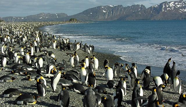 Vahşi Yolculuk: Vahşi Adalar, Nat Geo Wild ekranlarında