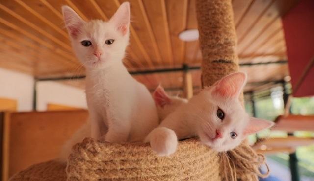 NTV, kedilerin dünyasını her hafta Bi Dünya Sevgi'de ekrana getiriyor!