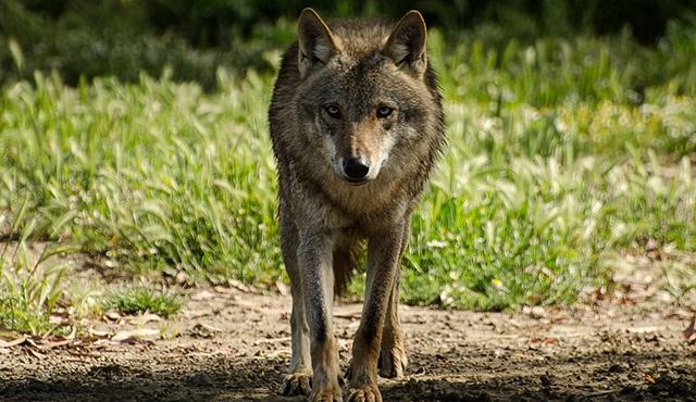Vahşi Yolculuk: Türkiye, Nat Geo Wild ekranlarında olacak