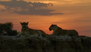 Yırtıcılar Diyarı, National Geographic WILD kanalında ekrana gelecek!
